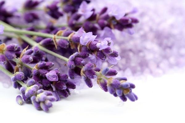 Laventeli - lavender - Bearel